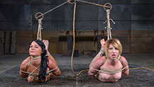 Kay Kardia and London River prepared for hog tie suspension